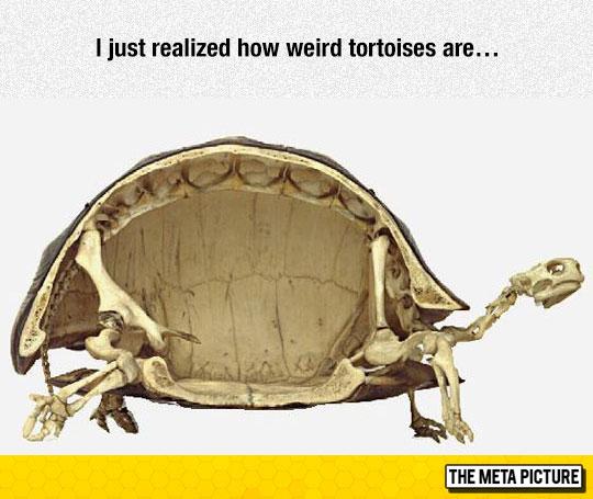 cool-turtles-skeleton-weird