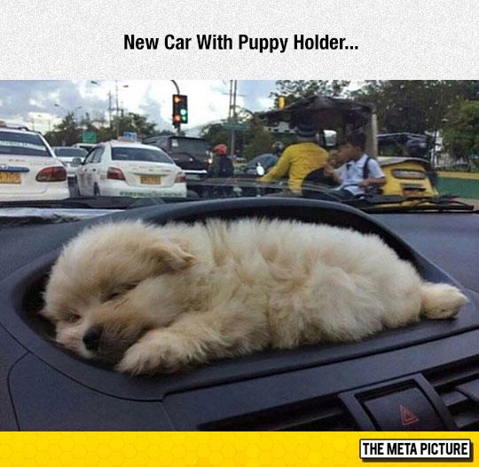 funny-puppy-sleeping-car-cute