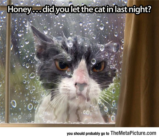 cool-angry-cat-wet-rain-outside