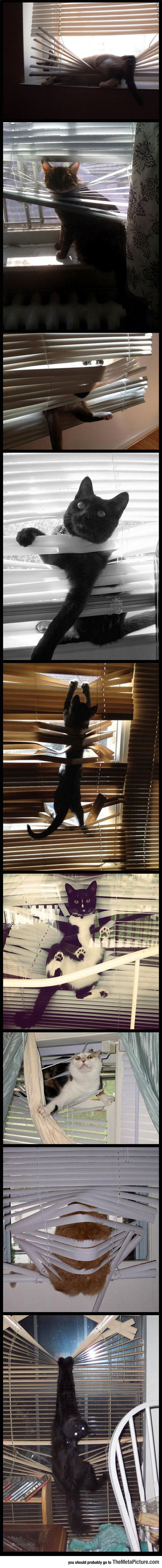 Cats And Window Blinds Are Mortal Enemies