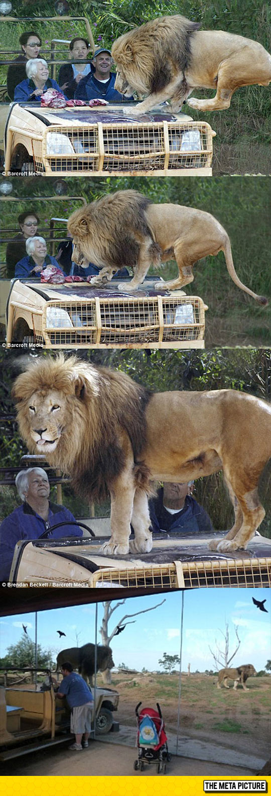 cool-lion-glass-cage-zoo
